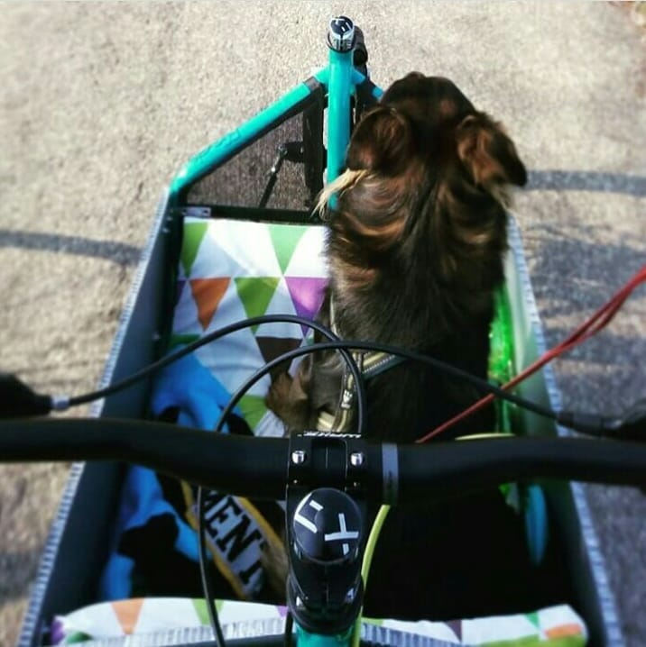bronte cargo bike dogs cani viaggiare travelling